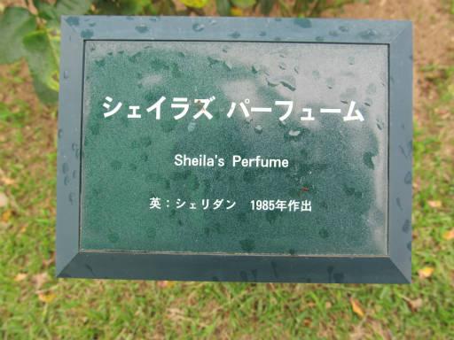 20110625・敷島公園ばら園のバラ40-1