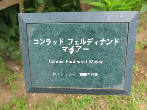 20110625・敷島公園ばら園のバラ47-1