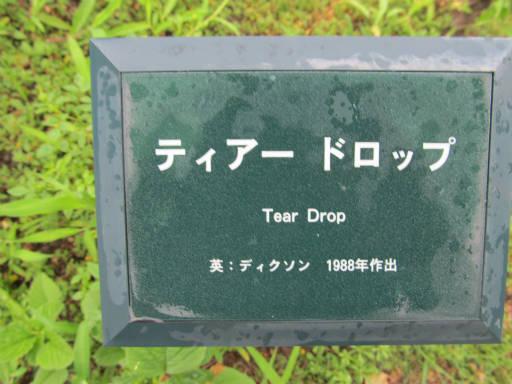 20110625・敷島公園ばら園のバラ51-1