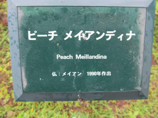 20110625・敷島公園ばら園のバラ54-1