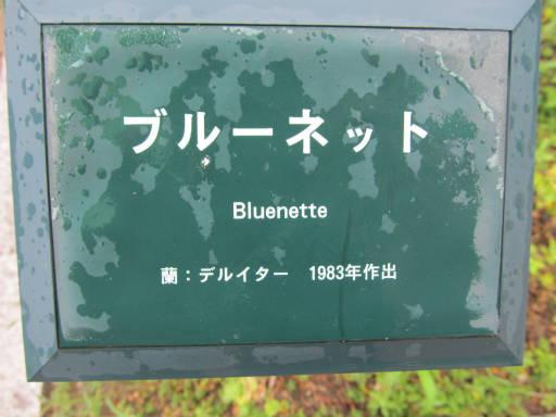 20110625・敷島公園ばら園のバラ53-1