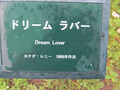 20110625・敷島公園ばら園のバラ52-1