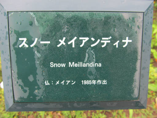 20110625・敷島公園ばら園のバラ55-1