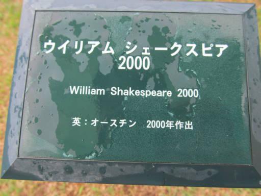 20110625・敷島公園ばら園のバラ57-1