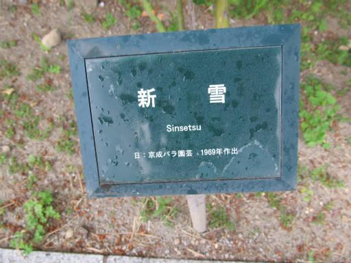 20110625・敷島公園ばら園のバラ58-1