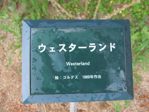 20110625・敷島公園ばら園のバラ59-1