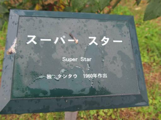 20110625・敷島公園ばら園のバラ62-1