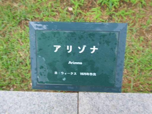 20110625・敷島公園ばら園のバラ68-1