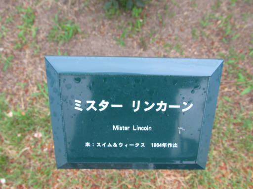 20110625・敷島公園ばら園のバラ70-1