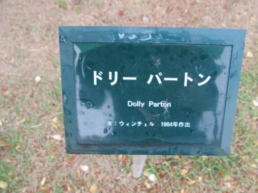 20110625・敷島公園ばら園のバラ72-1