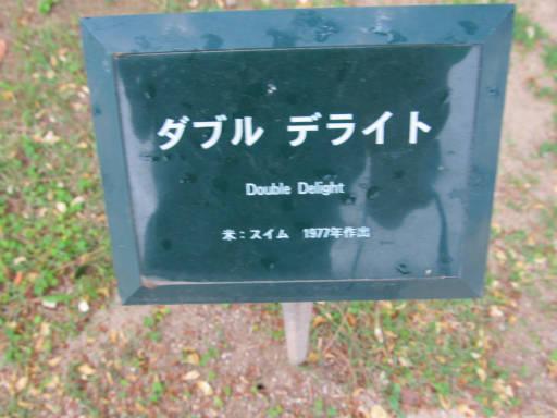 20110625・敷島公園ばら園のバラ73-1