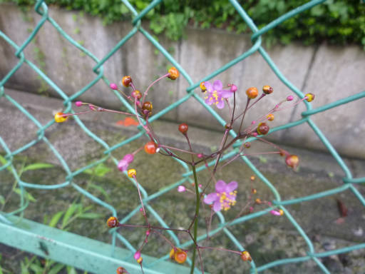 20110731・選挙散歩40・ハゼラン