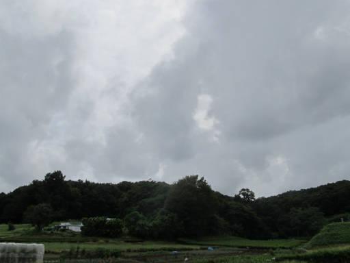 20110904・自然観察会空07