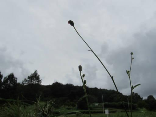 20110904・自然観察会空04