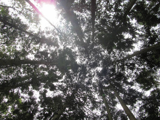 20110904・自然観察会空02