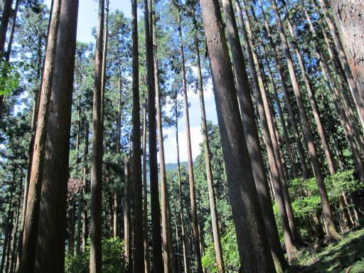 20110910・武甲山3-22