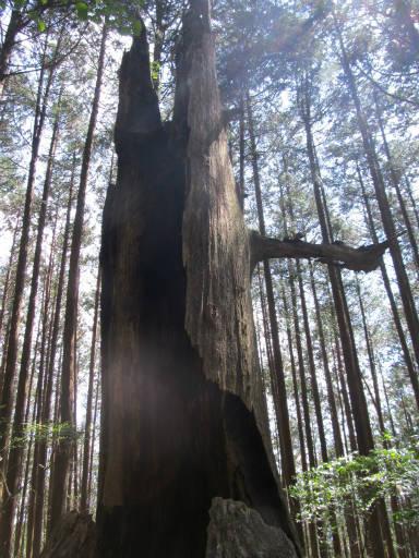 20110910・武甲山3-28・31丁目