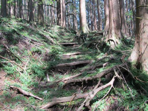 20110910・武甲山3-32