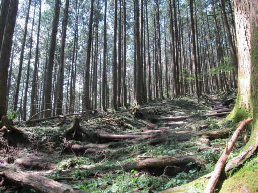 20110910・武甲山4-09