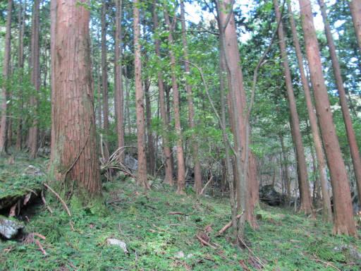 20110910・武甲山4-18
