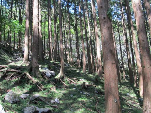 20110910・武甲山4-15