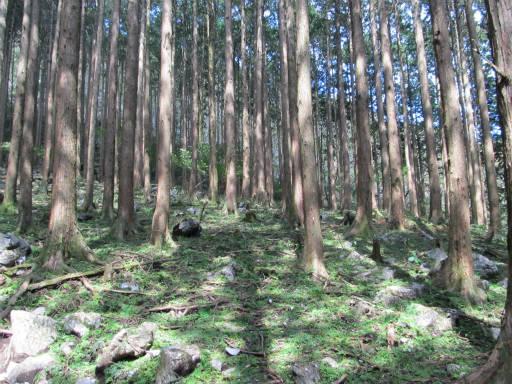20110910・武甲山4-13