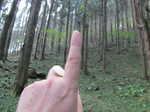 20110910・武甲山4-24・ここから急坂
