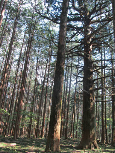20110910・武甲山6-15
