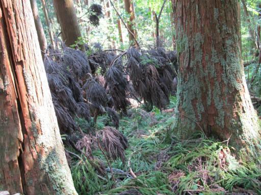 20110910・武甲山6-32・熊と思った。x±x
