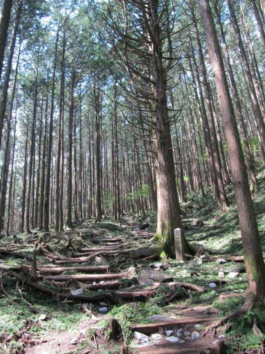 20110910・武甲山4-06 やや大