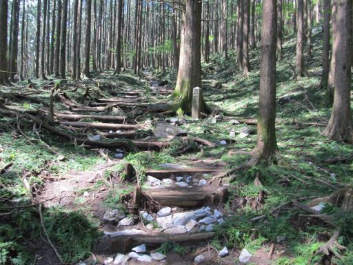 20110910・武甲山4-05 やや大