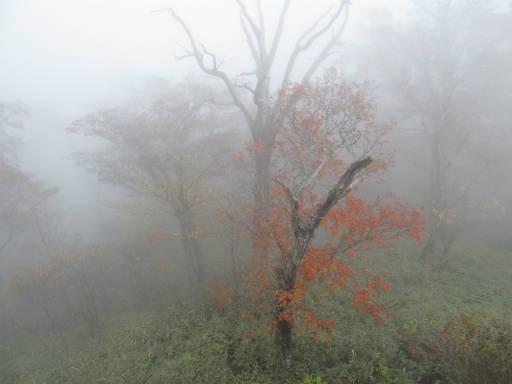 20111023・霧降08