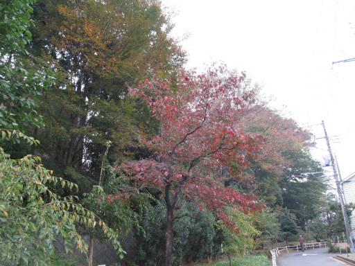 20111105・狭山湖03