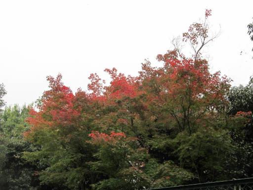 20111105・狭山湖33