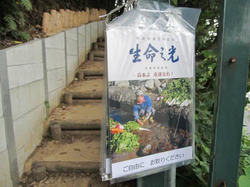 20111105・狭山湖38