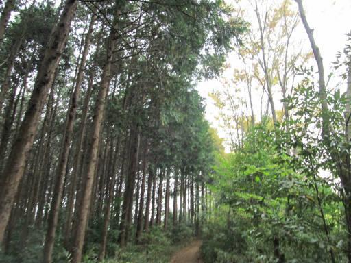 20111105・狭山湖45