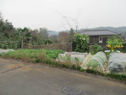 20111105・狭山湖63