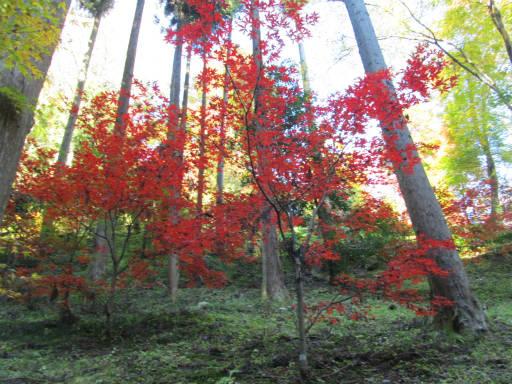 20111123・東郷1-23