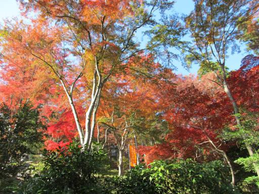 20111123・東郷1-25
