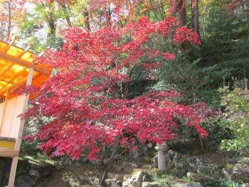 20111123・東郷2-09