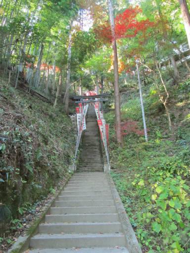 20111123・東郷2-12