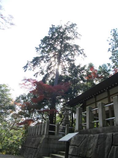 20111123・東郷2-19