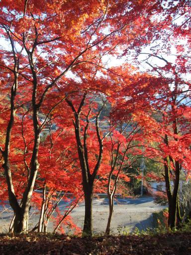 20111123・奥武蔵24