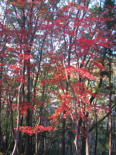 20111123・奥武蔵22