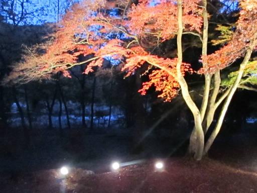 20111123・長瀞2-06