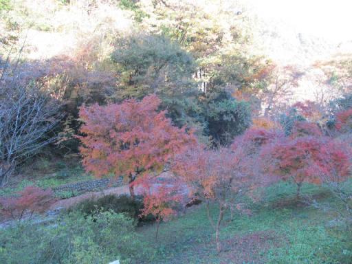 20111126・払沢の滝01