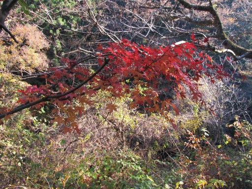 20111126・払沢の滝05