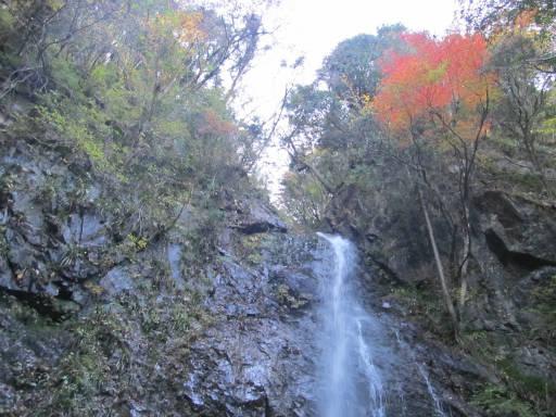 20111126・払沢の滝16