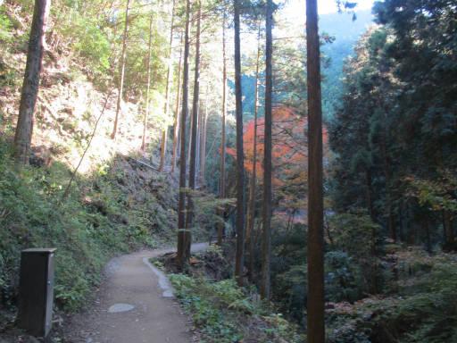 20111126・払沢の滝19