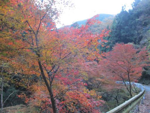 20111126・神戸岩12